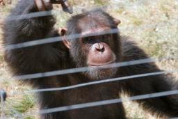 Chimp_07.jpg
