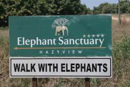Chimp_Elephant_Trip_41.jpg