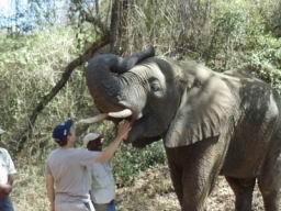 Elephant_04.jpg