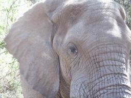Elephant_06.jpg