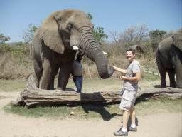 Elephant_09.jpg