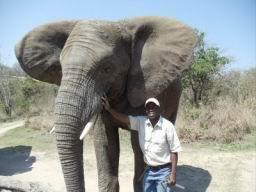 Elephant_12.jpg