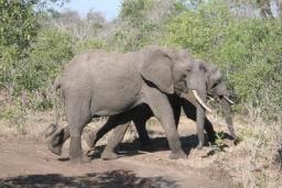 Elephant_14.jpg