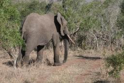 Elephant_15.jpg