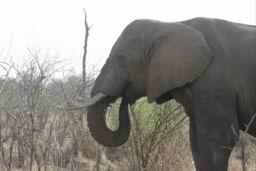 Elephants_Hlane_02.jpg