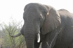 Elephants_Hlane_04.jpg