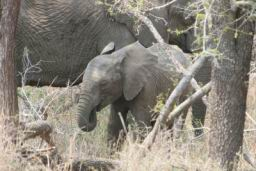 Elephants_Hlane_09.jpg