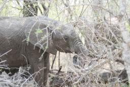 Elephants_Hlane_10.jpg