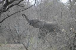 Elephants_Hlane_13.jpg