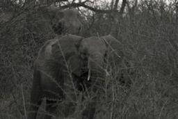 Elephants_Hlane_16.jpg
