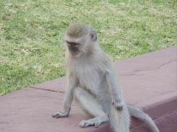 Monkey_02.jpg