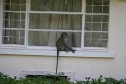Monkey_05.jpg