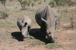 Rhino_02.jpg