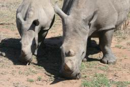 Rhino_03.jpg
