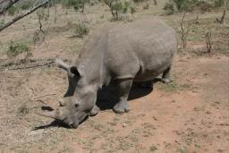 Rhino_04.jpg