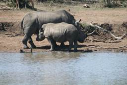 Rhino_05.jpg