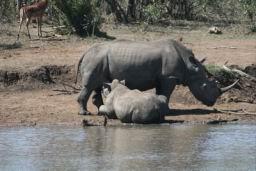 Rhino_06.jpg