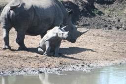 Rhino_07.jpg