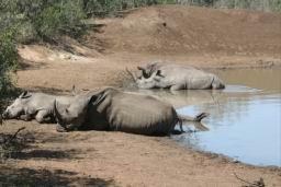 Rhino_08.jpg