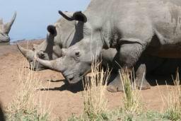 Rhino_09.jpg