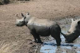 Rhino_10.jpg