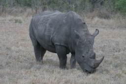 Rhino_11.jpg