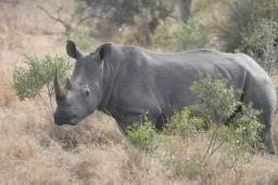 Rhino_13.jpg
