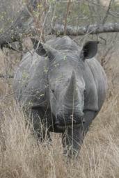 Rhino_14.jpg