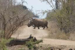 Rhino_Hlane_05.jpg