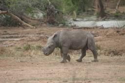 Rhino_Hlane_15.jpg
