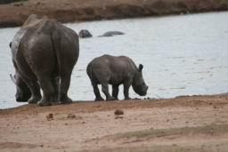 Rhino_Hlane_16.jpg
